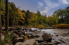 Δέντρα φθινοπώρου σε ένα δάσος με ένα ρεύμα και ένα αργό νερό στοκ φωτογραφία με δικαίωμα ελεύθερης χρήσης