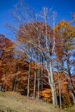 Δέντρα φθινοπώρου σε μια δασική σκηνή φθινοπώρου βουνών με ζωηρόχρωμο Στοκ Εικόνες