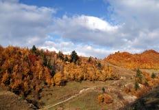 Δέντρα φθινοπώρου στα βουνά Στοκ εικόνες με δικαίωμα ελεύθερης χρήσης