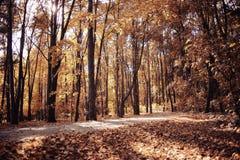 Δέντρα φθινοπώρου στο δάσος στοκ φωτογραφία με δικαίωμα ελεύθερης χρήσης
