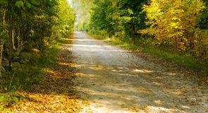 Δέντρα φθινοπώρου στο δάσος Στοκ Εικόνα