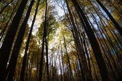 Δέντρα φθινοπώρου στο δάσος στην ηλιόλουστη ημέρα στοκ εικόνα