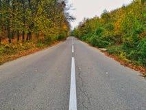 Δέντρα φθινοπώρου στο δευτερεύοντα δρόμο Στοκ φωτογραφία με δικαίωμα ελεύθερης χρήσης