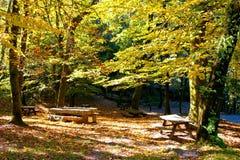 Δέντρα φθινοπώρου στο εθνικό πάρκο Geres στοκ φωτογραφία