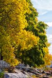 Δέντρα φθινοπώρου στο πάρκο Στοκ Εικόνες