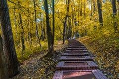 Δέντρα φθινοπώρου στο πάρκο στοκ εικόνα με δικαίωμα ελεύθερης χρήσης