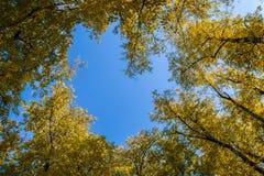 Δέντρα φθινοπώρου στο πάρκο στοκ φωτογραφίες