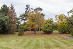 Δέντρα φθινοπώρου στο πάρκο Στοκ Φωτογραφία