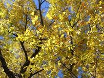 δέντρα φθινοπώρου Στοκ εικόνες με δικαίωμα ελεύθερης χρήσης