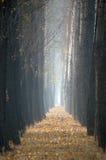 δέντρα φθινοπώρου στοκ εικόνα με δικαίωμα ελεύθερης χρήσης