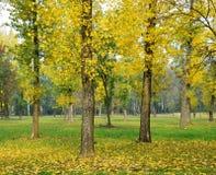 δέντρα φθινοπώρου στοκ φωτογραφίες