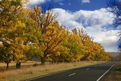 δέντρα φθινοπώρου στοκ εικόνες