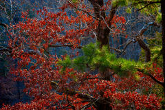 Δέντρα 1 φθινοπώρου Στοκ Φωτογραφία