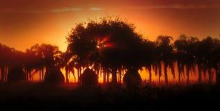 δέντρα φοινικών ομίχλης sunthrough Στοκ εικόνα με δικαίωμα ελεύθερης χρήσης