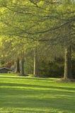 δέντρα φωτός του ήλιου άνο& Στοκ Εικόνες
