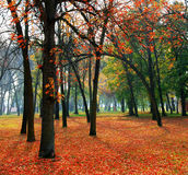 δέντρα φύλλων Στοκ Εικόνες