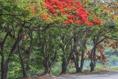 Δέντρα φλογών στοκ εικόνες