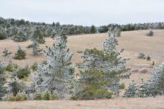 Δέντρα χαρτονιού Στοκ Εικόνες