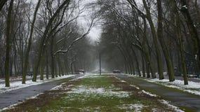 Δέντρα χειμερινού χιονιού, δρόμος πάρκων, άσπρες σειρές δέντρων αλεών Στοκ Εικόνα