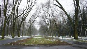 Δέντρα χειμερινού χιονιού, δρόμος πάρκων, άσπρες σειρές δέντρων αλεών Στοκ εικόνα με δικαίωμα ελεύθερης χρήσης