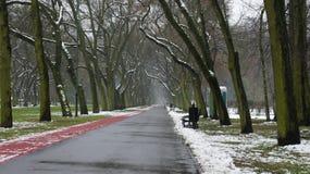 Δέντρα χειμερινού χιονιού, δρόμος πάρκων, άσπρες σειρές δέντρων αλεών Στοκ φωτογραφία με δικαίωμα ελεύθερης χρήσης