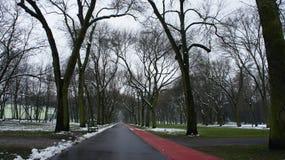 Δέντρα χειμερινού χιονιού, δρόμος πάρκων, άσπρες σειρές δέντρων αλεών Στοκ Φωτογραφία