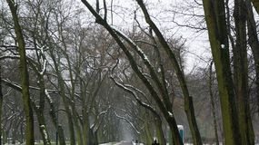 Δέντρα χειμερινού χιονιού, δρόμος πάρκων, άσπρες σειρές δέντρων αλεών Στοκ Εικόνες