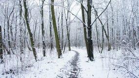 Δέντρα χειμερινού χιονιού, οδική προοπτική πάρκων, άσπρες σειρές δέντρων αλεών Στοκ εικόνα με δικαίωμα ελεύθερης χρήσης