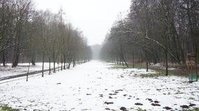Δέντρα χειμερινού χιονιού, οδική προοπτική πάρκων, άσπρες σειρές δέντρων αλεών Στοκ φωτογραφία με δικαίωμα ελεύθερης χρήσης