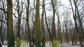 Δέντρα χειμερινού χιονιού, οδική προοπτική πάρκων, άσπρες σειρές δέντρων αλεών Στοκ εικόνες με δικαίωμα ελεύθερης χρήσης