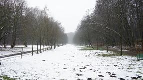 Δέντρα χειμερινού χιονιού, οδική προοπτική πάρκων, άσπρες σειρές δέντρων αλεών Στοκ Φωτογραφίες