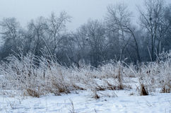 Δέντρα χειμερινών τοπίων Στοκ φωτογραφία με δικαίωμα ελεύθερης χρήσης