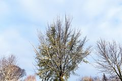 δέντρα χιονιού κάτω Στοκ Φωτογραφία