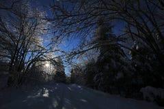 Δέντρα χιονιού πάγου Backlight Στοκ Φωτογραφία
