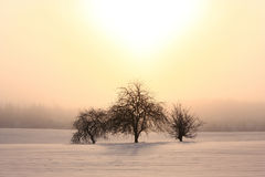 δέντρα χιονιού πεδίων Στοκ Φωτογραφίες