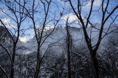 Δέντρα χιονιού στις ιαπωνικές Άλπεις Στοκ εικόνα με δικαίωμα ελεύθερης χρήσης