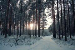 Δέντρα χιονιού στο χειμερινό δάσος Στοκ εικόνα με δικαίωμα ελεύθερης χρήσης