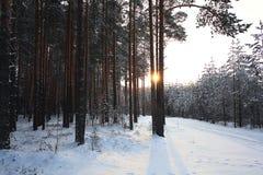 Δέντρα χιονιού τοπίων στο πυκνό δάσος Στοκ Εικόνα