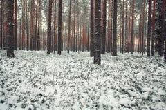Δέντρα χιονιού τοπίων Στοκ Εικόνες
