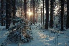 Δέντρα χιονιού τοπίων Στοκ Εικόνα