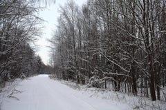Δέντρα χιονιού τοπίων Στοκ φωτογραφία με δικαίωμα ελεύθερης χρήσης