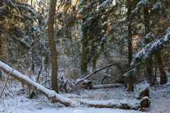δέντρα χιονιού χιονοθύελ& Στοκ εικόνα με δικαίωμα ελεύθερης χρήσης