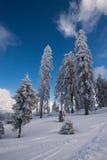 Δέντρα χιονιού Στοκ Φωτογραφία