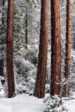 δέντρα χιονιού Στοκ φωτογραφία με δικαίωμα ελεύθερης χρήσης