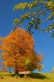 δέντρα χρωμάτων φθινοπώρου Στοκ εικόνες με δικαίωμα ελεύθερης χρήσης