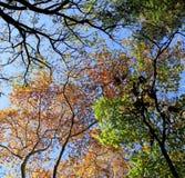 Δέντρα χρώματος φθινοπώρου στον ουρανό όμορφοι φιλικοί κορίτσι και τύπος από κοινού Στοκ εικόνα με δικαίωμα ελεύθερης χρήσης