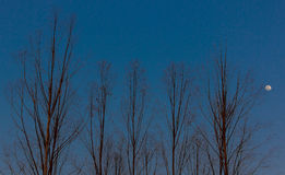 Δέντρα χωρίς φύλλα κατά τη διάρκεια της εποχής πτώσης, Στοκ εικόνες με δικαίωμα ελεύθερης χρήσης