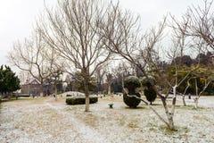 Δέντρα χωρίς φύλλα σε ένα πάρκο κατά τη διάρκεια του χειμώνα Στοκ Εικόνα