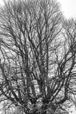 Δέντρα χωρίς φύλλα το φθινόπωρο Στοκ Φωτογραφίες