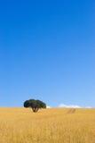 δέντρα 1 ακρωτηρίου Στοκ εικόνα με δικαίωμα ελεύθερης χρήσης